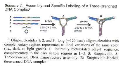 Assembly of a Labelled Three-Branched DNA Complex