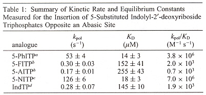 Rate of Nontemplating Base Incorporation