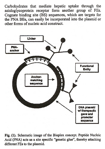 Plasmid/PNA Therapeutic Vector