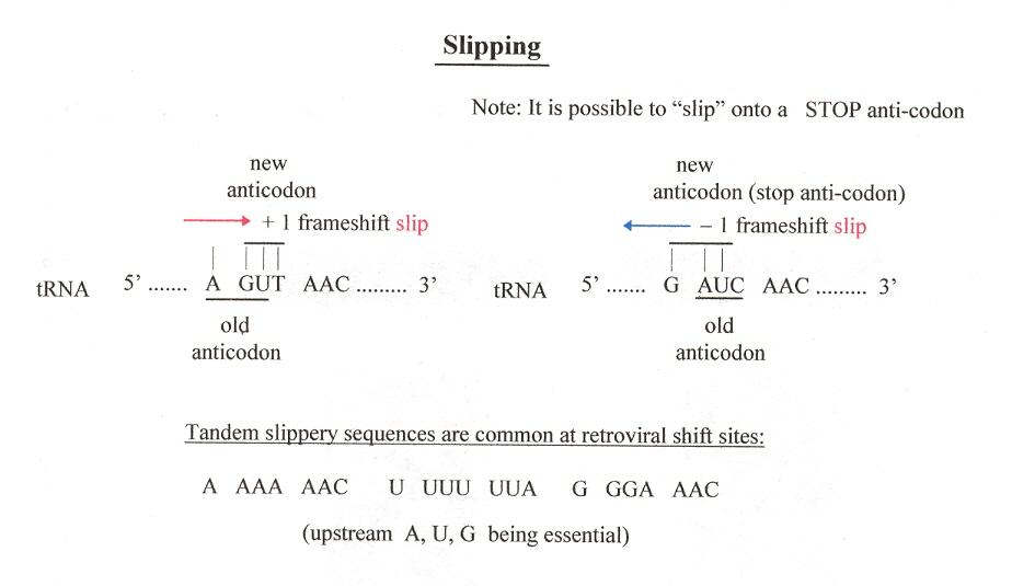 Hopping & Slipping (Bioinformatics)