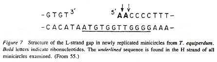 Universal Nucleotide Distiguished Sequences